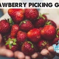 Go Pick Some Strawberries Local U-Pick Strawberry Picking Guide Lake Country Family Fun