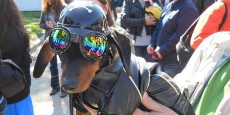 Weiner Dog Derby