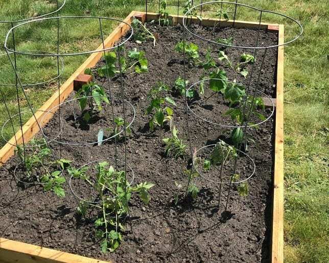 Raised Garden Project Garden Blog 4 Tips for the day of planting Lake Country Family Fun
