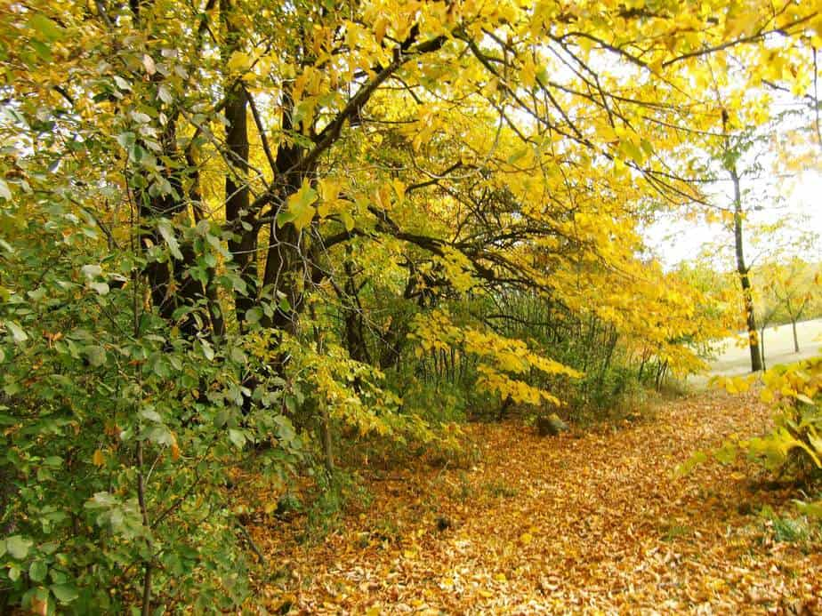 weekend guide september 29 october 1 u2022 lake country family fun
