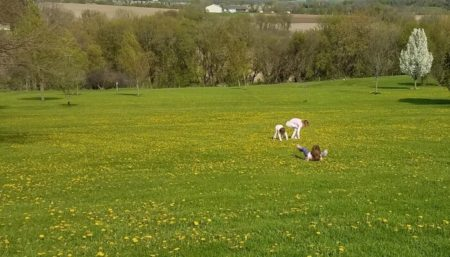 Earth Day Backyard Fun