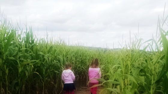 Corn Maze Guide Southeastern Wisconsin Waukesha County
