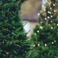 South East Wisconsin Christmas Tree Farms Guide Christmas Tree Lighting Guide
