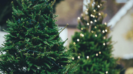Shoppes At East Wind 2020 Decorated For Christmas South East Wisconsin Christmas Tree Farms Guide • Lake Country