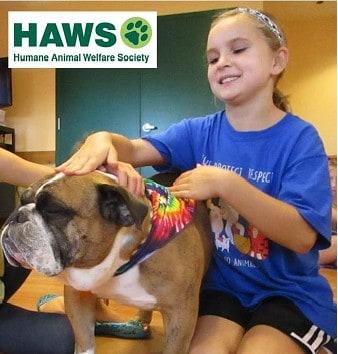 HAWS of Waukesha Humane Society Pets