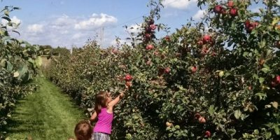 South East Wisconsin Apple Picking Guide
