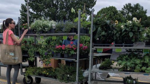 Gardening Guide Erin Spring 2020