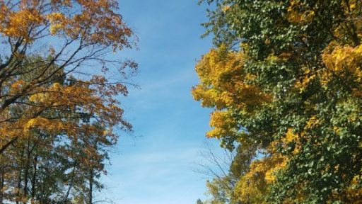 Fall colors trees southeastern Wisconsin