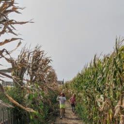 Fall Weekend Guide Corn Maze Fall