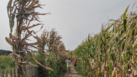 Fall Weekend Guide Corn Maze Fall