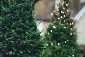 South East Wisconsin Christmas Tree Farms Guide Christmas Tree Lighting Guide